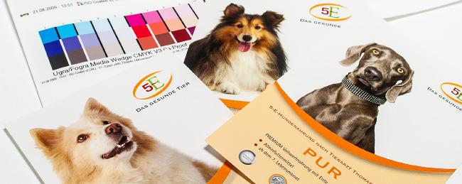 """Gestaltung eines Corporate Designs für """"5-E Das gesunde Tier"""""""